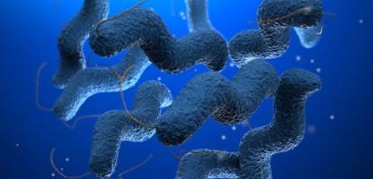 Μολύνσεις από Campylobacter